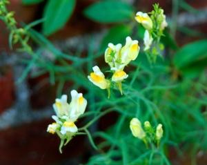 Tiny Flowers, Fort Miflin, Pennsylvania